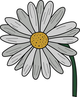 Chamomile, Sunflower, Bloom, Botany, Outline