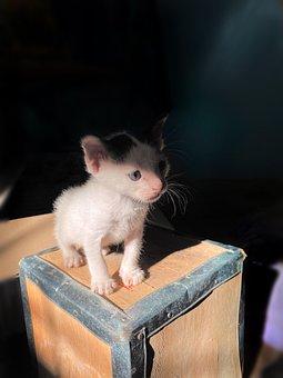 Kitten, Pet, Adorable, Cute, Cats, Puppy, Dark