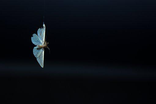 Moth, Spider, Butterfly, Bugs, Insects, Fly, Mosquito