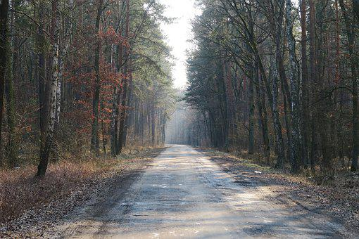 Forest, Road, Winter, Nature, Trees, Woods, Journey