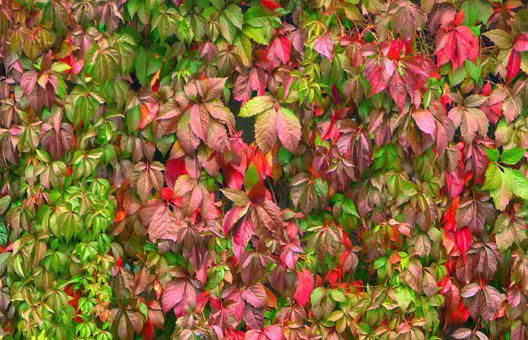 Leaves, Plant, Nature, Foliage, Green, Red