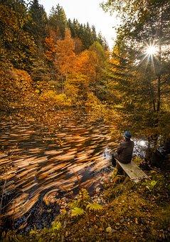 Lake, Forest, Leaves, Trees, Fall Foliage, Autumn