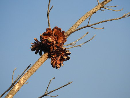 Branch, Tree, Sky, Leaves, Dry, Dried, Withered, Forest