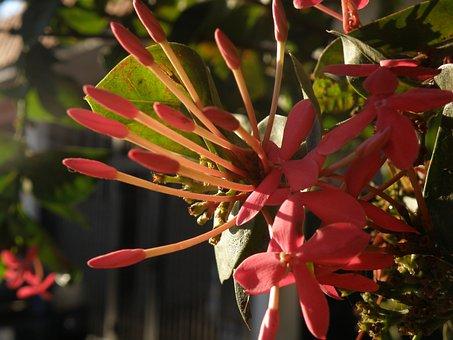 Flowers, Golden Hour, Maracaibo, Nature, Morning