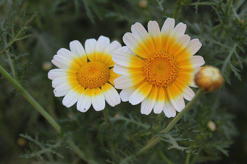 Couple Flowers, Natural, Scenery, Hd Wallpaper