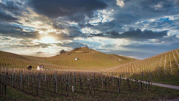 Vineyard, Evening, Sunset, Sky, Nature, Landscape