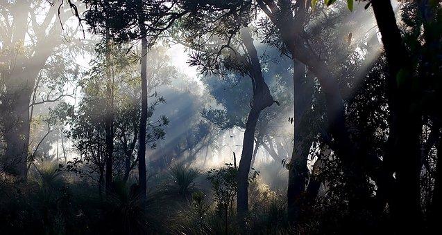 Forest, Fog, Sunlight, Silhouette, Sunrise, Sunshine