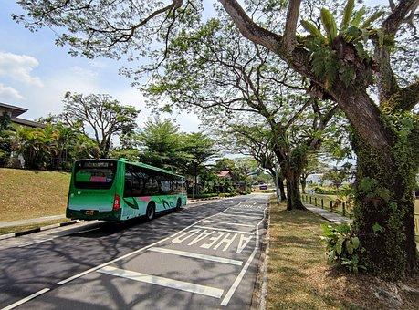 Bus, Road, Campus, Transport, Trees, Transportation