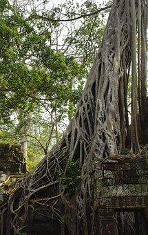 Tree, Temple, Ruins, Roots, Wall, Archaeology, Angkor