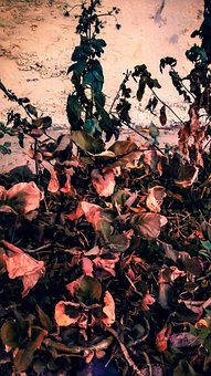 Wallpaper, Background, Screen, Landscape, Dark, Leaves