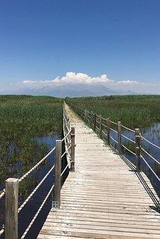 Nature, Green, Spring, Environment, Earth, Water, Lake