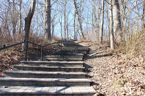 Stairs, Steps, Trees, Bare Trees, Woods, Woodlands