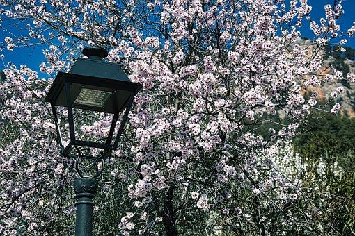 Almond Blossom, Mallorca, Open, Corona Times, Lockdown