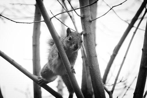 Squirrel, Garden, Tree, Animal, Rodent, Cute, Mammal