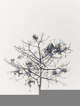 Tree, Nature, Bangladesh, Mobile Photography