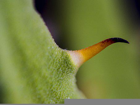 Aloe, Sukulent, Plant, Room, Thorn, Corner, Orange