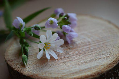 Flowers, Wood, Daisy, Spring, Spring Flowers, Nature
