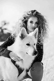 White Swiss Sheppard, Dog, Dog Picture, Dog Photos