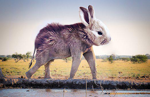 Bunny, Elephant, Easter, Science, Breeding