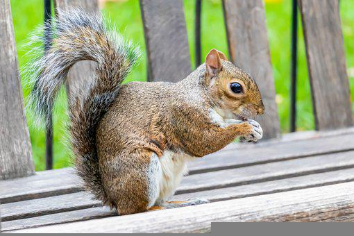 London, Park, Squirrel, Animal, England, Animals