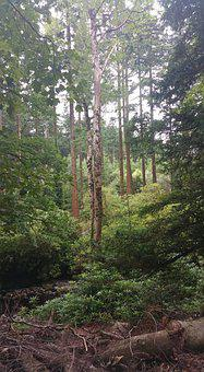 Woodlands, Woods, Forest, Nature, Trees, Woodland