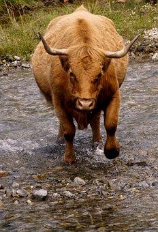 Beef, Horns, Attack, Risk, Free Running, Bach