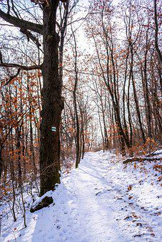 Cold, Environment, Europe, Forest, Frost, Frozen, Hike