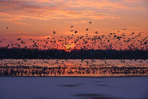 Sunset, Birds, Seagulls, Lake, Ice, Frozen, Nature