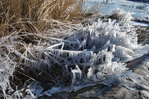 Lake Balaton, Frozen, Hungary, Winter, Reed, Part