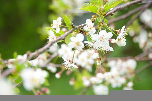 Spring, Spring Pictures, Our Characters, Plum Blossoms