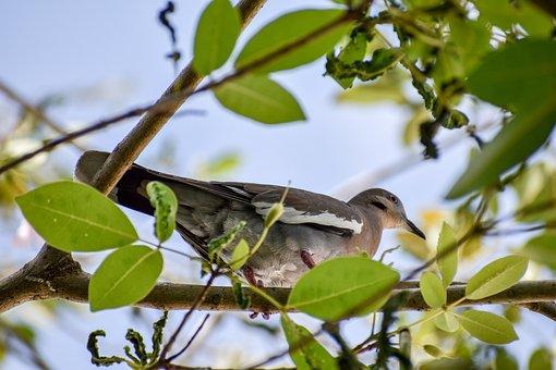 Pigeon, Dove, Bird, Peace, Feathers, Plumage, Beak