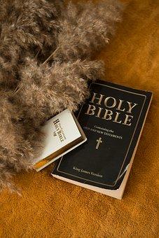 Bible, Book, Reading, Christian, Praying, Text