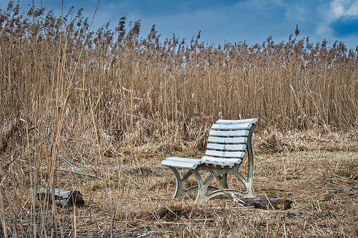 Bench, Bank, Seat, Nature, Reed, Season, Mood