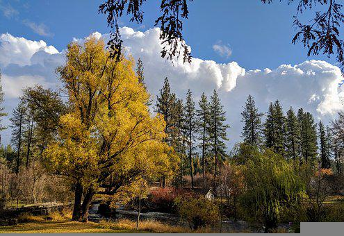 Clouds, Willow, Tree, River, Bridge
