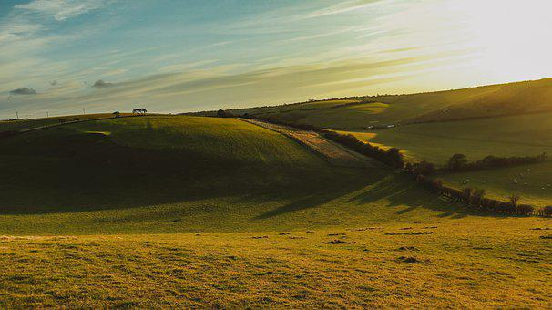 Wool, Fields, Sheeps, Farm, Animals, Rural, Grass