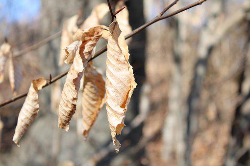 Weather, Dry Leaves, Sun, Spring, Tree, Park