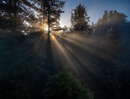 Morning, Sunlight, Forest, Nature, Sun, Dawn, Sunrise