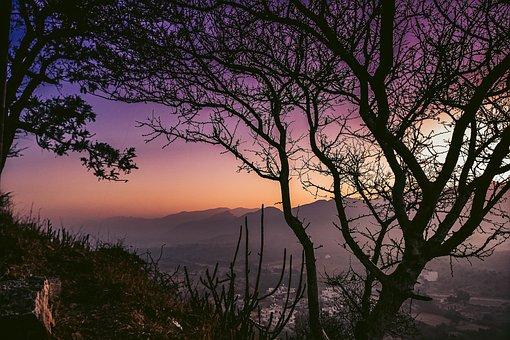 Sunrise, Top Spot, Tree, Emotion, Wild, Bird, Wildlife