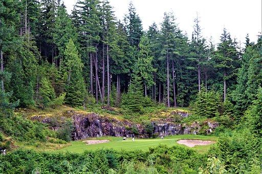 Trees, Golf, Golfer, Green, Landscape, Grass, Fairway