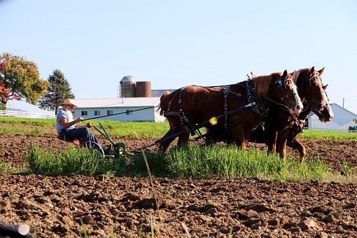 Amish, Farmer, Draft Hoses, Plow, Farming, Horse-draw