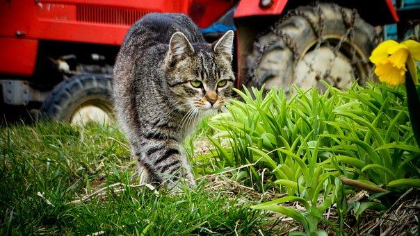 Cat, Kitten, Animals, Pet, Cute, Domestic Cat