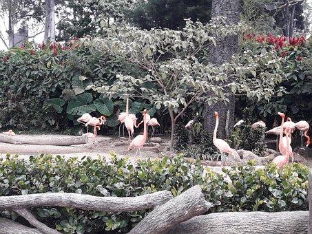 Pink, Wild, Animals
