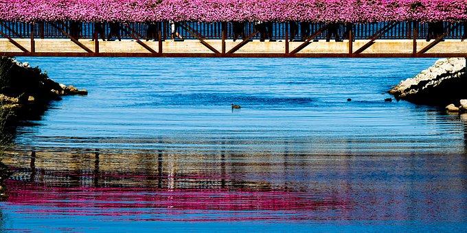 Colours, Water, Bridge, Ducks, Pink, Blue, Romantic