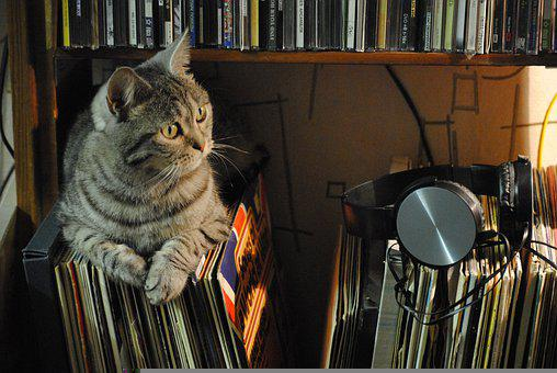 Cat, Music, Headsets, Records