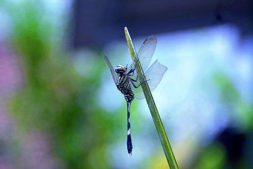 Dragonfly, Leaf, Green, Wing, Color, Light