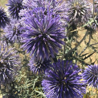 Flower, Nature, Spring, Flora, Bloom, Blossom, Garden