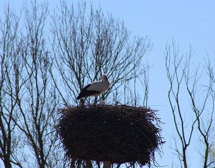 Family, Stork, Birth, Nest, Mother, Birds, Ave, Nature
