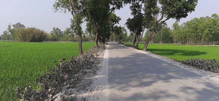 Road, Pavement, Field, Trees, Ashphalt, Landscape