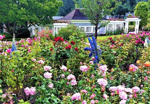 English Garden, Flowers, Pink, Nature, Summer, Rose