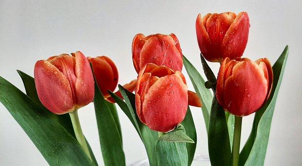 Tulips, Tulip, Flowers, Bunch Of Flowers, Vase